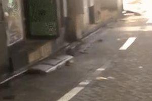Nhiều chuột lớn xuất hiện trên đường phố Tokyo sau siêu bão Hagibis