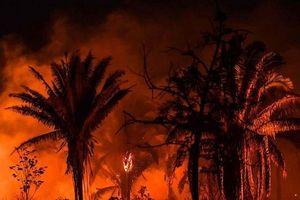 Loài khỉ vừa phát hiện ở Amazon có nguy cơ tuyệt chủng do hỏa hoạn