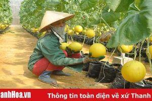 Các cấp hội nông dân trong tỉnh: Nhiều phong trào thi đua thiết thực, hiệu quả