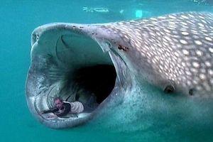 Điều gì xảy ra khi bạn bị thủy quái nuốt chửng?