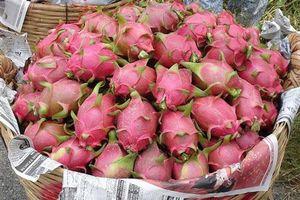 Xuất khẩu rau quả sang Trung Quốc giảm mạnh