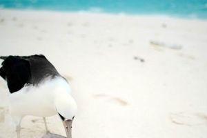 Ngày chim di cư thế giới nhấn mạnh nguy cơ ô nhiễm nhựa