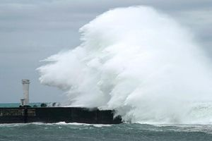 Thông tin mới nhất về hai thuyền viên Việt Nam gặp nạn do bão Hagibis