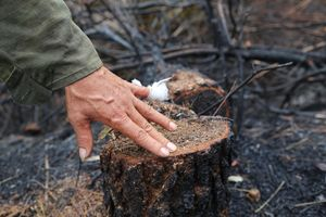 Hơn 1.000 ha rừng ở miền Trung bị cháy hồi giữa năm