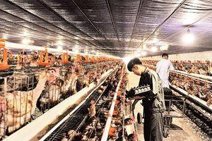 Quốc Oai xây dựng các xã đạt chuẩn nông thôn mới nâng cao