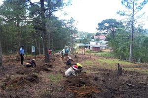 Đà Lạt trồng lại rừng trên đất rừng bị lấn chiếm
