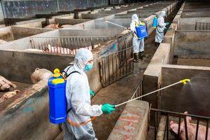 Giá thịt lợn tăng 69% sau 1 năm, lạm phát Trung Quốc tăng vượt mọi kỳ vọng