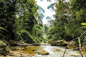 Lâm Đồng 'lắc đầu' dự án do đụng quy hoạch rừng sản xuất
