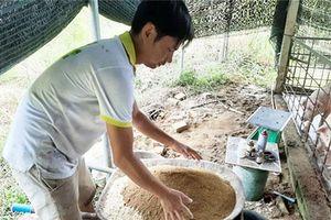Quảng Ngãi: Làm giàu bằng mô hình chăn nuôi gia súc, gia cầm sạch