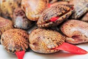 Người đăng tin 'tử vong do ăn sò lụa đỏ' bị đề nghị xử lý