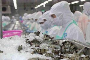 Trung Quốc cấm nhập khẩu tôm Ecuador, doanh nghiệp Việt cần thận trọng