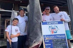 Cậu bé 8 tuổi câu được cá mập hổ nặng 314kg