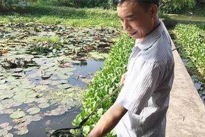 Phú Thọ: Có của ăn của để nhờ nuôi 'con siêu đẻ' ở ao bèo