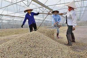 Việt Nam - Trung Quốc: Hợp tác tiêu thụ chè, cà phê