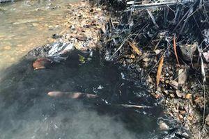Khởi tố vụ án gây ô nhiễm nguồn nước sạch sông Đà