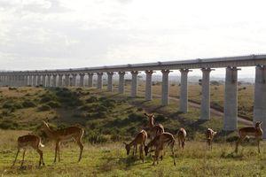 TQ bất ngờ cắt vốn, Kenya gánh dự án đường sắt 'có đầu không có đuôi'