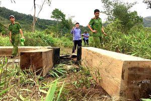 Gia Lai: Khởi tố vụ công trường khai thác gỗ trái phép