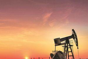 Giá dầu thô ổn định, thị trường chờ đợi thông tin hoạt động khai thác dầu tại Hoa Kỳ
