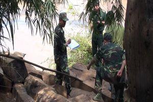 Phát hiện bãi tập kết gỗ vô chủ ở Đắk Lắk