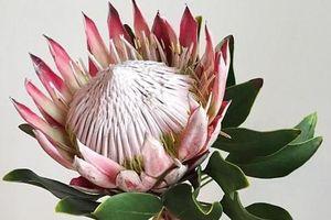 Những bó hoa hot trend nhất dịp 20/10: Siêu to khổng lồ, hoa nhập độc nhất vô nhị