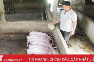 Dịch tả lợn châu Phi diễn biến khó lường ở Hà Tĩnh, nuôi nông hộ chưa nên tái đàn!