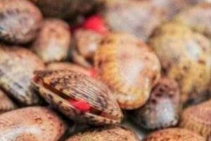 Cà Mau: Phạt người tung tin ăn sò lụa đỏ tử vong 10 triệu đồng