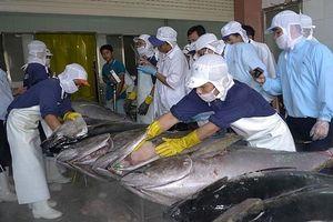 Dính thẻ vàng IUU, xuất khẩu cá ngừ sang EU giảm mạnh