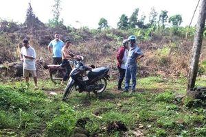 'Cò' đất chết bí ẩn trong vườn điều ở Đồng Nai