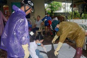 Sau ngập lụt, dịch tả lợn lây lan nhanh ở thành phố Vinh