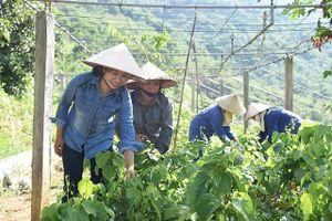 Điểm sáng mô hình nông nghiệp hữu cơ