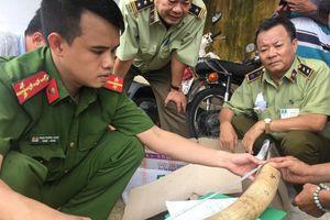 Thu giữ gần 20kg ngà voi vận chuyển trái phép tại Bình Định
