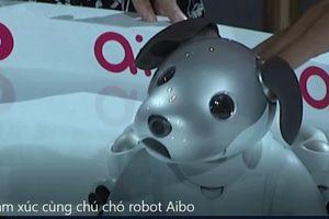 Trải nhiệm cảm xúc cùng chú chó robot Aibo