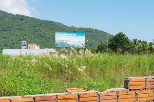 Đà Nẵng: Bao lâu nữa sẽ 'xóa sổ' mùa lau trắng dưới chân núi Sơn Trà?