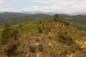 Lâm Đồng chỉ đạo xử lý đích danh tập thể, cá nhân để xảy ra các vụ phá rừng