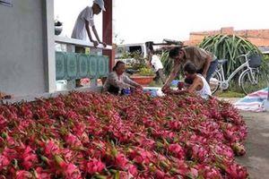 Xuất khẩu trái cây sang Trung Quốc bị ùn ứ, Bộ Công thương 'ra tay'