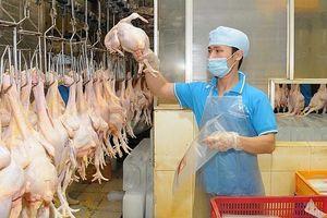 Thiếu hụt thịt lợn: Sẵn sàng nguồn cung thay thế