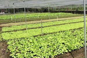 Xây dựng vùng nguyên liệu sản xuất nông sản thực phẩm an toàn