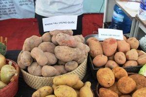Cảnh báo nông sản Trung Quốc đội lốt hàng Việt tràn lan các khu chợ
