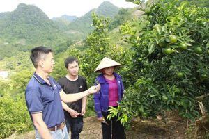 Thu hàng trăm triệu mỗi năm nhờ trồng cây ăn quả trên đất dốc