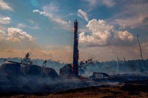 Rừng Amazon sẽ chạm 'giới hạn không thể đảo ngược' vào năm 2021