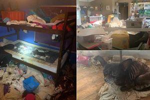 Bắt giữ 'cặp ba' để 3 bé gái sống trong ngôi nhà ngập rác với hàng trăm con vật