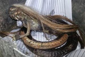 Phát hiện sinh vật mình rắn đầu quỷ, có tóc như người gây hoang mang dư luận