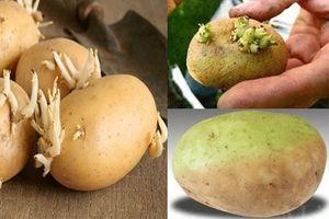 Điểm mặt một số thực phẩm chứa chất độc tự nhiên