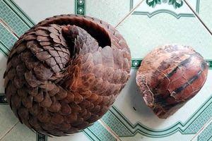 Bắt quả tang nhiều đối tượng buôn bán, tàng trữ động vật hoang dã quý hiếm ở Quảng Nam