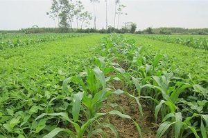 Giống cây trồng Miền Nam (SSC) trả cổ tức 20% bằng tiền mặt