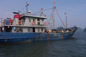 Bắt giữ nhiều tàu khai thác thủy sản trái phép