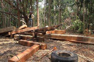 Chưa hoàn thành hồ sơ xin giao đất, công ty nông lâm sản đã trồng 500 ha rừng