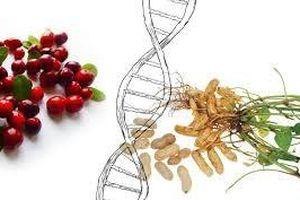Phát hiện thêm các loài thực vật biến đổi gien tự nhiên