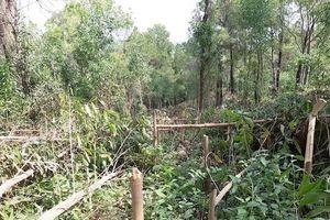 Quảng Nam: Hàng ngàn cây keo bị chặt 'chưa rõ lý do'