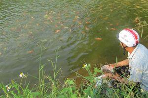 Phát triển bền vững nghề nuôi cá nước ngọt